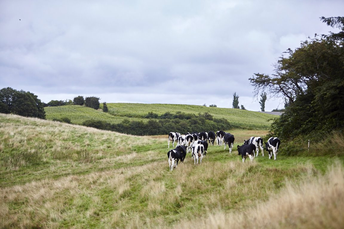 IEEP Report: A vision for a sustainable European dairy industry
